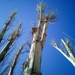 גיזום וכריתת עצים