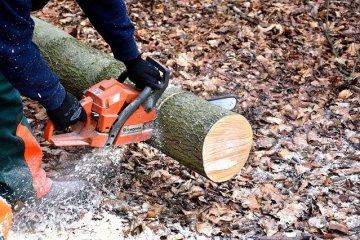 גוזם עצים – למה צריך?