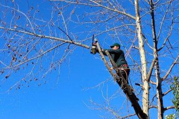 4 בדיקות שיש לבצע לבחירת חברה מיומנת לביצוע גיזום עצים ברעננה