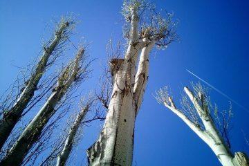 7 נקודות לחשיבה לגבי גיזום עצים בתל אביב